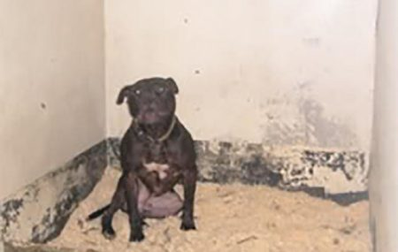 Save Lennox: Lennox is a loveable 5 year old family member, and therapy animal for the family