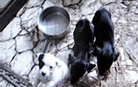 A father and son who ran a Paignton puppy farm in which animals lived in filthy conditions have been banned from keeping dogs.