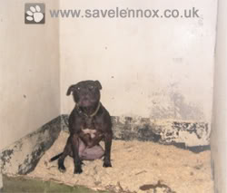 Save Lennox from the Cruel BSL