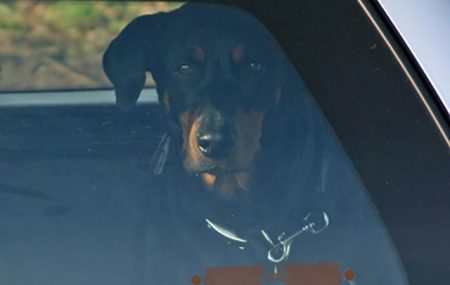 For many owners a car journey with their beloved dog becomes the journey from hell, with whining, trying to go under seats, barking, or even vomiting. Some dogs do suffer from motion sickness. The problem may well be excitement, anxiety, fear or most commonly a bad experience partially created by the owner.