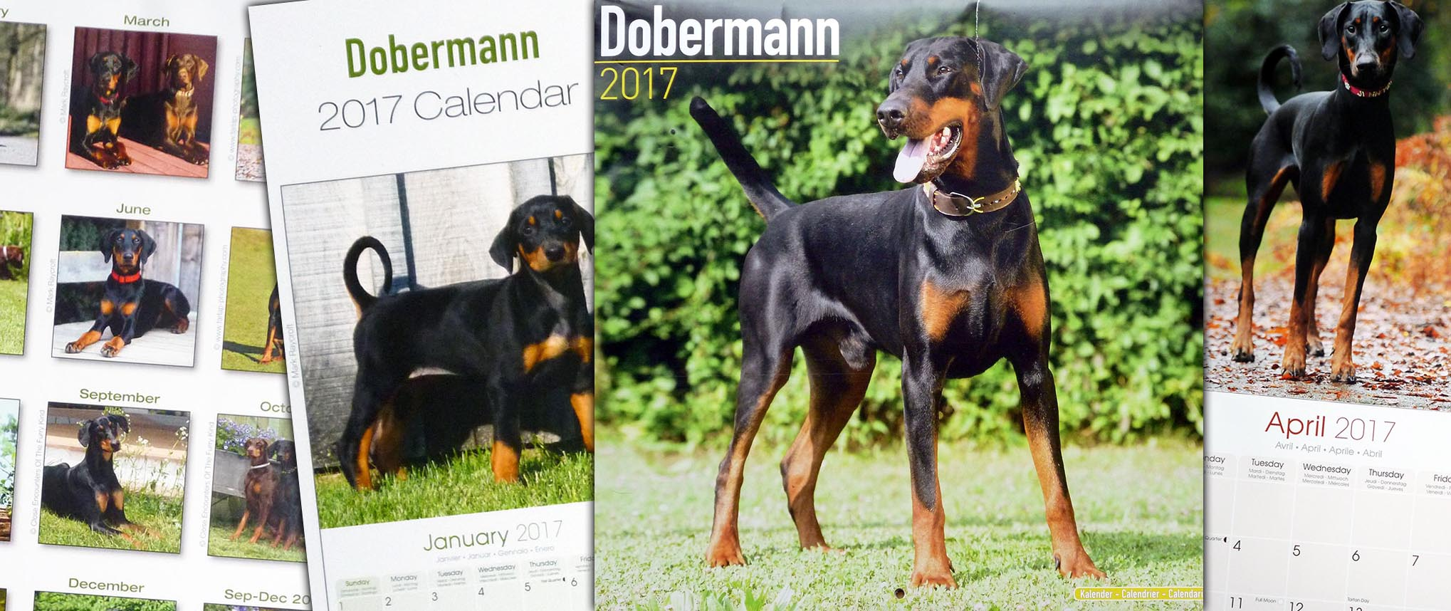 2017 Dobermann Rescue Calendar