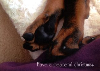 2018 Xmas Card - Paws for Thought