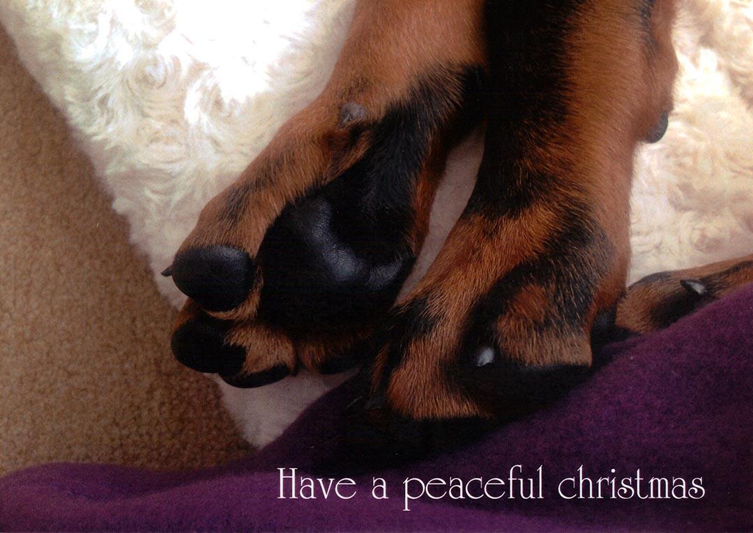 Christmas Cards - Dobermann Rescue Ltd (UK)