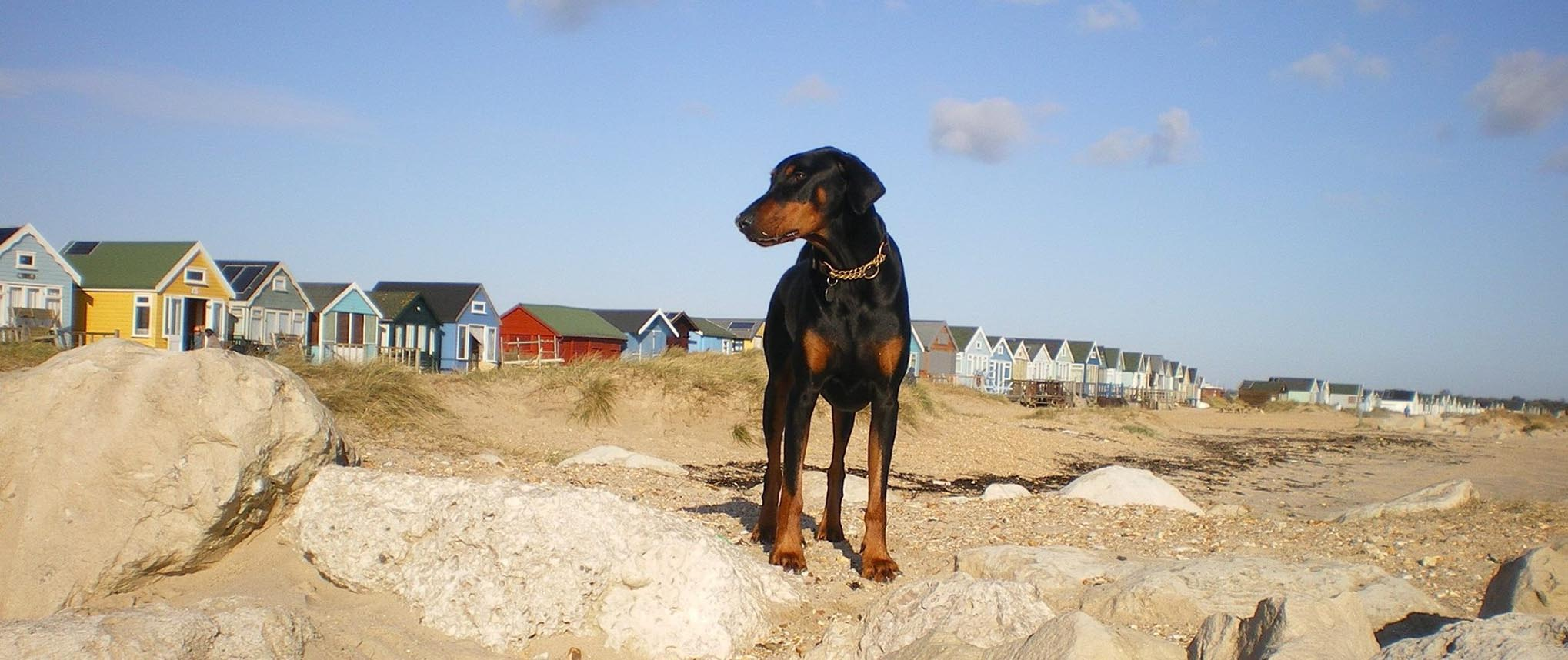 Dobermann Rescue