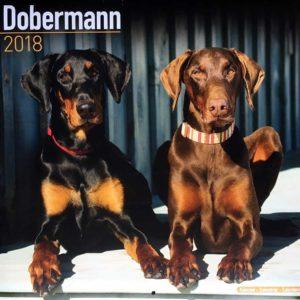 Dobermann Calendar 2018