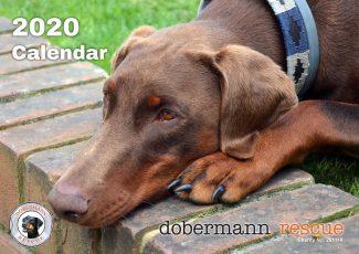 2020 Dobermann Rescue Calendar - Front