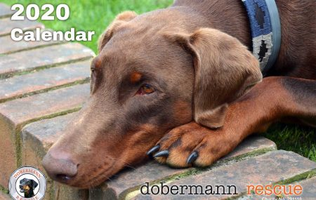 We're running a photo competition to get you to send in your best photos for a chance to get your rescue dobe featured in the 2021 Dobermann Rescue Calendar!